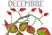 decembre4